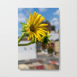 Yellow Flower in NYC Metal Print
