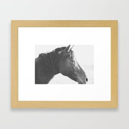 Fine Art Horse Picture, Black and White Horse Photo Framed Art Print