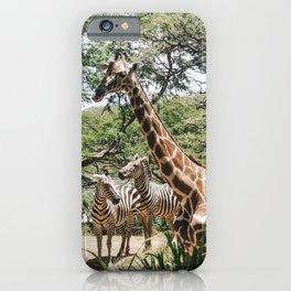 Giraffe and Zebra Friends iPhone Case