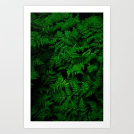 Deep Forest Ferns Art Print