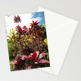 Red Ti Tropical Gardens Hawaiian ti plant Wailua Maui Hawaii Stationery Cards