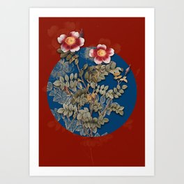 Vintage Botanical Variegated Burnet Rose on Circle Blue on Red Art Print