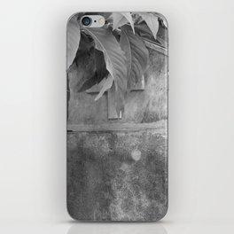grave under leafs iPhone Skin
