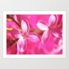 Pink Lilac Art Print