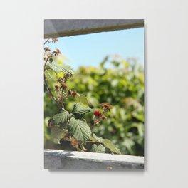Mendocino Wild Berries Metal Print
