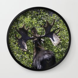 Big Moose Rack in RMNP Wall Clock