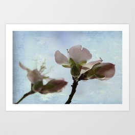 spring blooms on a bu background  Art Print