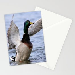 Male Mallard Duck Stationery Cards