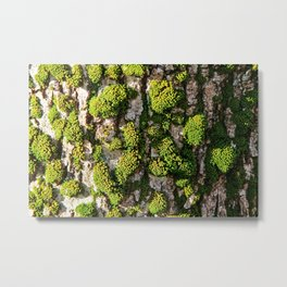 Green Moss Beauty Metal Print