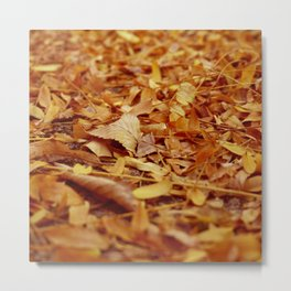 The Autumn leaves Metal Print