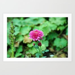 Pink Flower, Rainy Day Art Print