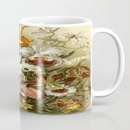 Ernst Haeckel Kunstformen der Nature Orchids Coffee Mug