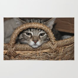 Kitty and the Basket Rug