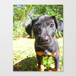 Small Pup Canvas Print