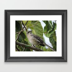 Mockingbird in a Mulberry Tree Framed Art Print