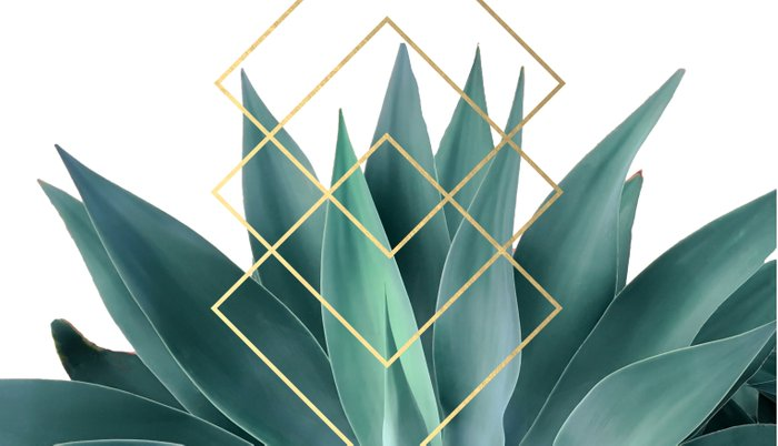 Agave geometrics Pillow Sham