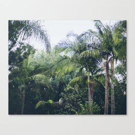 Palm Trees in a Tropical Garden Canvas Print