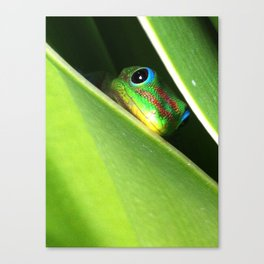 Eyes in the Grass Canvas Print