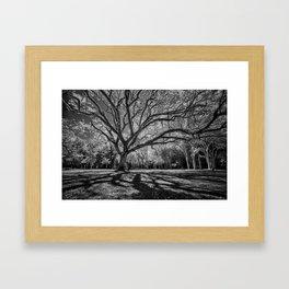 Big Tree Branches Framed Art Print