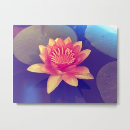 Secret Garden | Water lily  Metal Print