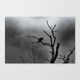 Solitary Crow Canvas Print