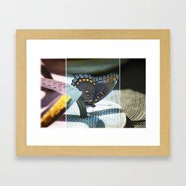 Butterfly beauty Framed Art Print