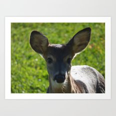 deer 2016 Art Print