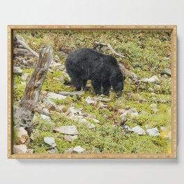 Busy Black Bear - Glacier NP Serving Tray