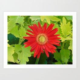 Stunning Red Flower Art Print