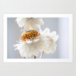 Delicate White & Yellow Flower Art Print