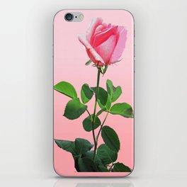 Pink Rose in Bloom iPhone Skin