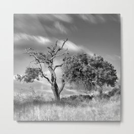 Windy sunset. Wonderful mountain almond. Square Metal Print