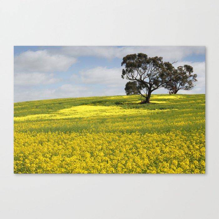 Canola Landscape in Australia Canvas Print