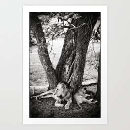 African Safari Lion Art Print