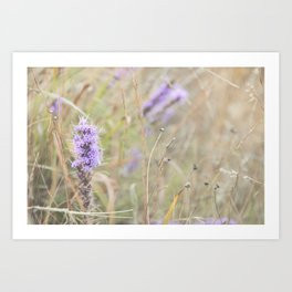 Wichita Mountain Wildflower Art Print
