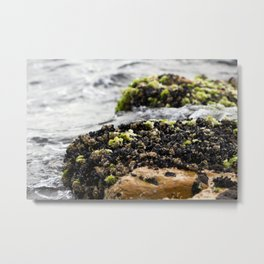 Windswept Shore Metal Print