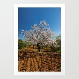 An Almond tree in flower Art Print