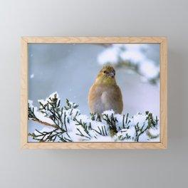 Is This Heaven? (American Goldfinch) Framed Mini Art Print