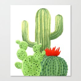 Perfect Cactus Bunch Canvas Print