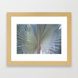 Bismarck Palm - Bismarckia nobilis Frond Framed Art Print