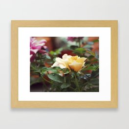 Raindrops on Roses Framed Art Print