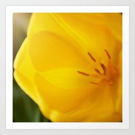 Yellow tulip close up #2 Art Print