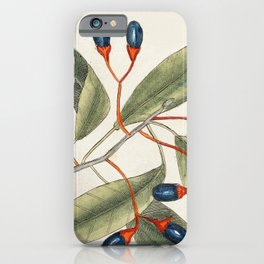 Tupelo Tree (Arbor in aqua nafeens)  Red Bay (Laurus Carolinenfis) Purple-berried Bay (Liguftrum Lau iPhone Case