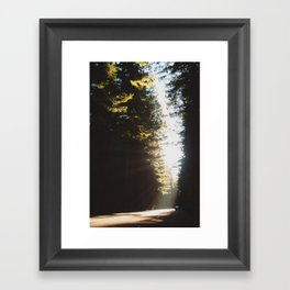 In Redwoods Framed Art Print