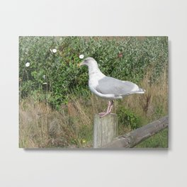 My Buddy Metal Print