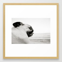 Pug Life | Reflecting at the Beach Framed Art Print