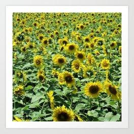 Sunflowers all day, everywhere, all around by Jéanpaul Ferro Art Print