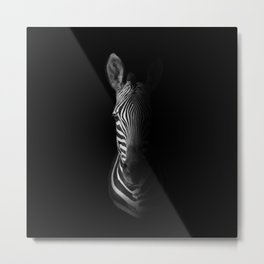 Cape Mountain Zebra Portrait Metal Print
