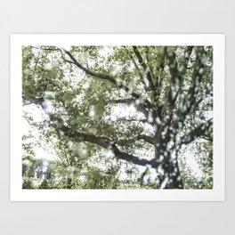 National Arboretum Art Print
