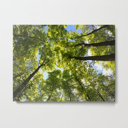 The Forest is my Friend Metal Print